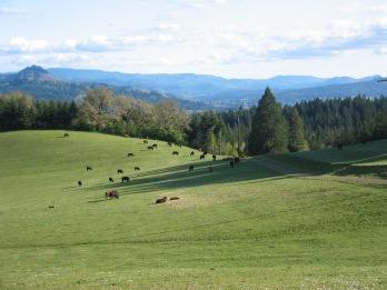 Ranch 2005